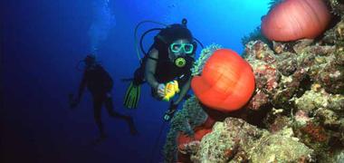 Plongée à la mer rouge