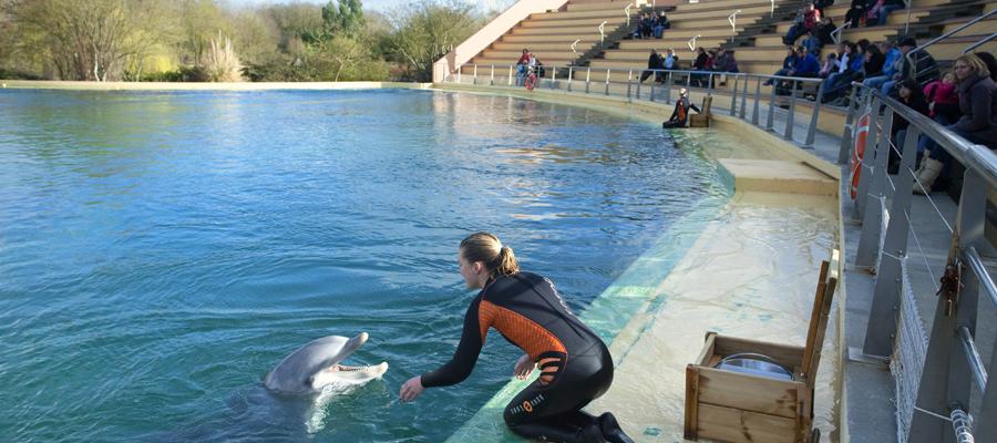 trafic de dauphins