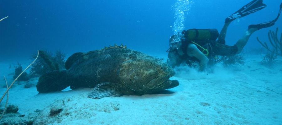 un magazine pour les photographes sous-marins