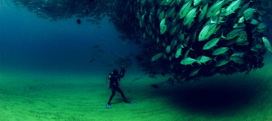 Paradise Plongee