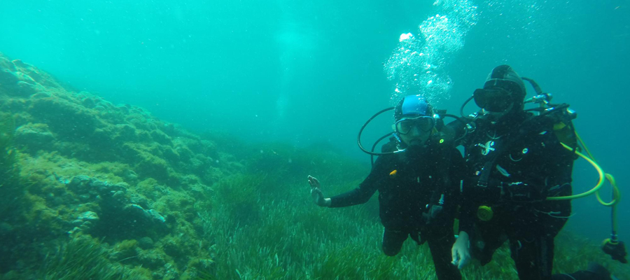 Compétition Rencontre de photos sous-marines