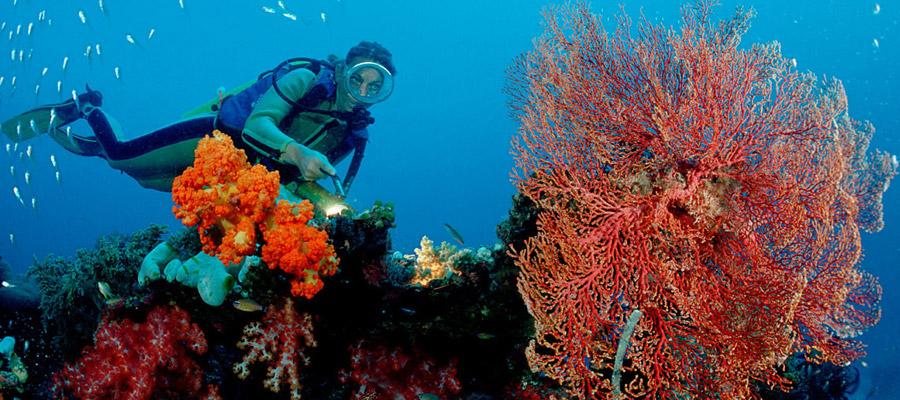 plongée sous marine dans le monde