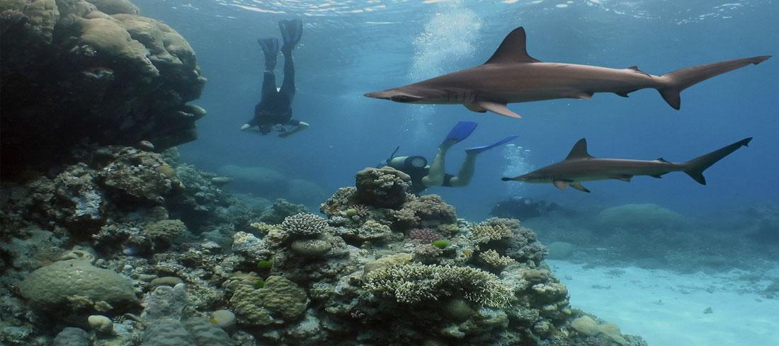 Plongée dans l'archipel Australes