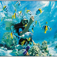 Plongée dans l'Iles du Gambier