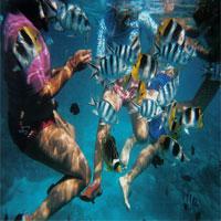Plonger en Polynésie