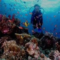 Plongée dans l'ile Fidji