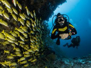 plongee sous-marine Antilles
