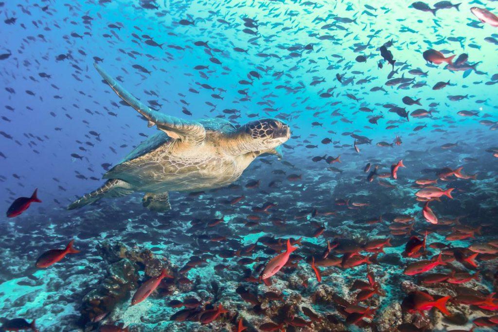 visu-le-catamaran-pour-explorer-les-plus-beaux-sites-antillais